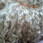 Руно состриженного козьего пуха (нестиранного) длинный белый волнистый