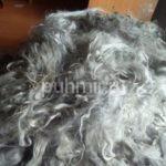 Руно состриженного козьего пуха (нестиранного) светло-серый