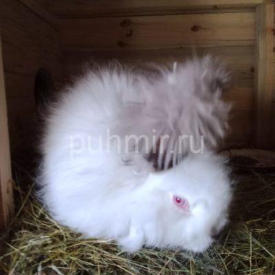 Пух кролика породы Немецкая Ангорка белоснежный